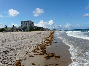 Florida by Piotrus 260.JPG