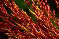Flower (a0005183) - panoramio.jpg