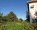 Flowerbed. August 2014. - Клумба. Август 2014. - panoramio.jpg