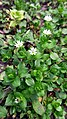 Flowers-Emma YSU 17.jpg