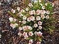 Flowers7180853.jpg
