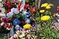 Flowers (247536401).jpg