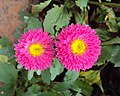 Flowers - Uncategorised Garden plants 84.JPG