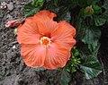 Flowers 008.jpg