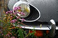 Flowers and car bumper after rain (Unsplash).jpg