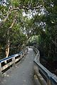 Footbridge - Sundarban Biodiversity and Interpretation Area - Taki - North 24 Parganas 2015-01-13 4661.JPG