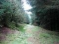 Footpath in Hafren Forest - geograph.org.uk - 1116558.jpg