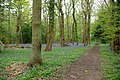 Footpath in Wainbody Wood at bluebell time - geograph.org.uk - 787661.jpg