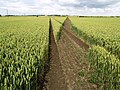 Footpath through the Field - geograph.org.uk - 876805.jpg