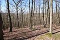 Forêt Départementale de Beauplan à Saint-Rémy-lès-Chevreuse le 14 mars 2018 - 21.jpg