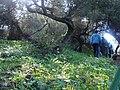 Forêt sidi Boughaba-wtajri.jpg