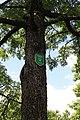 Forchtenstein - Naturdenkmal MA-026 - Speierling - Naturdenkmalschild.jpg