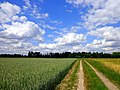 Forecast-cloudy - Flickr - Stiller Beobachter.jpg