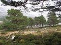 Forest, Allt nan Cùileach - geograph.org.uk - 318678.jpg