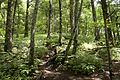 Forest in Doshi 06.jpg