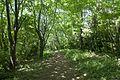 Forest in Mt.Nandai 04.jpg