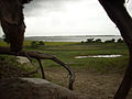 Fort Fisher State Recreation Area Roots.JPG