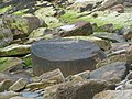 Fossil Tree - geograph.org.uk - 801771.jpg