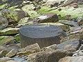 Fossil Tree - geograph.org.uk - 801771.jpg