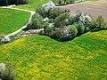 Frühling 100428 - panoramio.jpg
