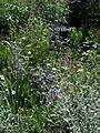 Front garden - Flickr - peganum (12).jpg