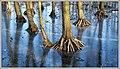 Frozen Roots (40658271101).jpg
