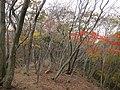 Fujiwaracho Sakamoto, Inabe, Mie Prefecture 511-0518, Japan - panoramio.jpg
