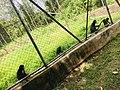Funaab zoo park 03.jpg