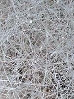 Fungal hyphae mass.jpg