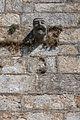 Gárgola na torre da igrexa de Santa Mariña de Cambados-CA6.jpg