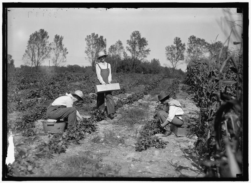 File:GIRL SCOUTS. FARMERETTES HARVESTING CROPS LCCN2016870487.tif