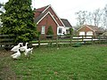 Gaggle of geese, a peacock and a cattery - geograph.org.uk - 399409.jpg
