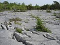 Gaitbarrow Nature Reserve - geograph.org.uk - 1130722.jpg