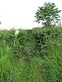 Gap in hedgerow - geograph.org.uk - 1344267.jpg