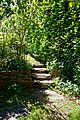 Garden steps and laurel in Nuthurst, West Sussex, England.jpg
