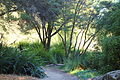 General view - San Francisco Botanical Garden - DSC09898.JPG