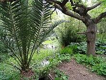 jardin botanique thuret