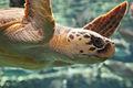 Georgia Aquarium (4662883283).jpg