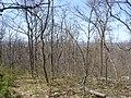 Gettysburg Battlefield (3440840305).jpg