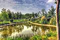 Gfp-china-nanjing-pond-landscape-and-sky.jpg