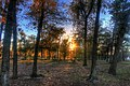Gfp-texas-houston-sunset-behind-trees.jpg