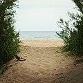 Ghiandaia frae le dune davanti al mare di Eraclea - Garrulus glandarius.jpg