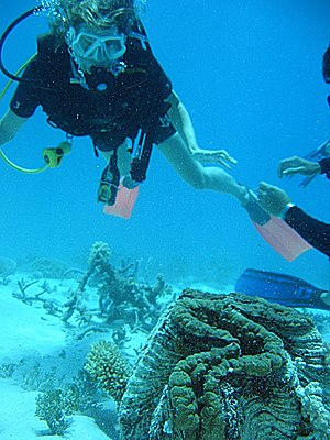 Effects of global warming on Australia - Climate change threatens the Australian tourism industry and may result in the loss of coral reefs.