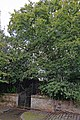 Giffordgate John Knox4.jpg