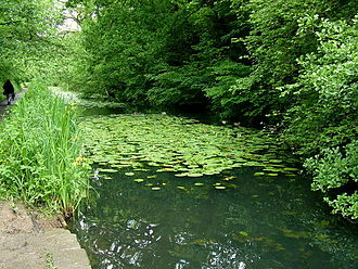 Glamorganshire Canal - This section of disused canal near Forest Farm is now a nature reserve. It is tranquil despite its close proximity to the M4 motorway.