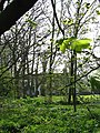 Glimpsed through trees - geograph.org.uk - 773268.jpg