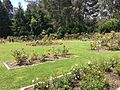 Golden Gate Park Rose Garden 8 2016-06-29.jpg