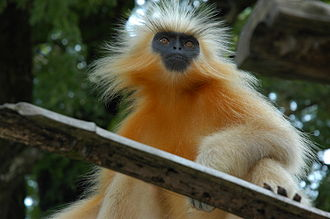 Physical geography of Assam - A golden langur