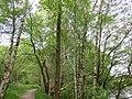 Grün Frühling im Wald ist sehr schön.jpg