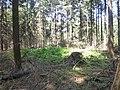 Grafheuvel nabij Hazeleger in Wolfheze -01.jpg